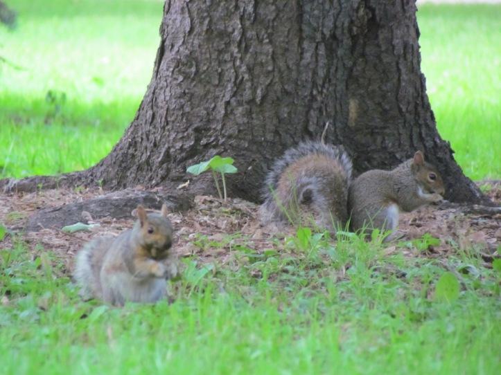 Eichhörnchen in der Innenstadt  - (c) tanadia.com