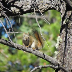 Squirrel in Banff, Alberta - (c) tanadia.com