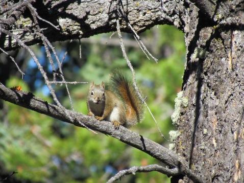 Squirrel in Banff, Alberta - (c) tanadia.com