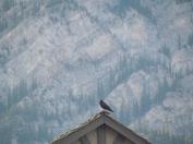 Banff - (c) tanadia.com