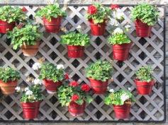 Blumen in der Altstadt - (c) tanadia.com
