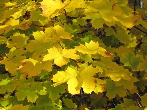 Herbstlich - (c) tanadia.com