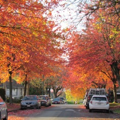 Mt. Pleasant in Vancouver , mein hood (c) tanadia.com