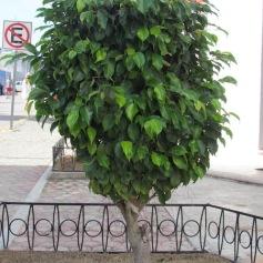 02 Outdoor Indoor Pflanzen (c) tanadia.com
