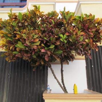 03 Outdoor Indoor Pflanzen (c) tanadia.com