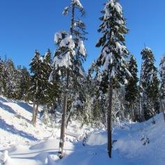 05 Cypress Mountain (c) tanadia.com