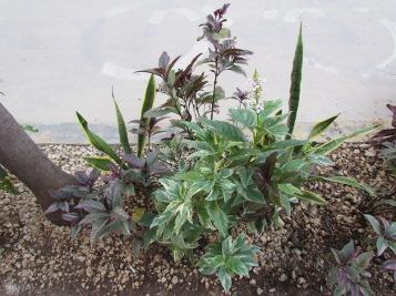 05 Outdoor Indoor Pflanzen (c) tanadia.com