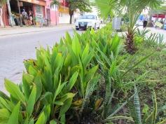 06 Outdoor Indoor Pflanzen (c) tanadia.com
