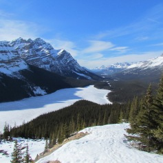 Peyto Lake, AB (c) tanadia.com