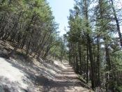Tunnel Mountain Trail