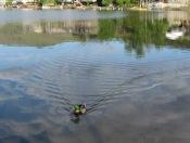 Morgenstimmung am Kalamalka Lake
