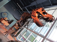 65 Mio. Jahre altes Dino Skelett in der Science World (c) tanadia.com
